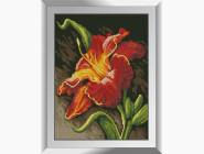 Цветы и букеты Лилия