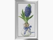 Цветы и букеты Гиацинт