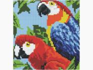 Птицы и павлины Попугаи