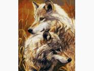 Животные и жители моря Волки