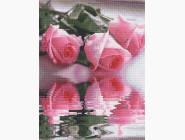 Цветы и букеты Розы на воде