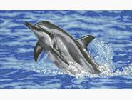 Морские пейзажи Дельфин