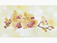 Цветы и букеты Желтая орхидея