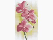 Цветы и букеты Орхидея