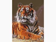 Животные и жители моря Величественный тигр