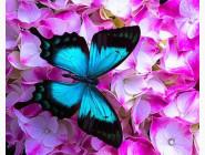 Новинки алмазной вышивки Бабочка в цветах