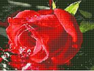 Новинки алмазной вышивки Бутон розы