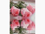 Цветы и букеты Отражение  роз