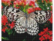 Новинки алмазной вышивки Бабочка на цветах