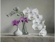 Новинки алмазной вышивки Орхидеи (GL77912)