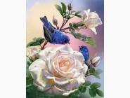 Новинки алмазной вышивки Птицы и розы (GL77918)