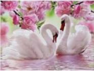 Новинки алмазной вышивки Лебеди в розовом (GM75229)
