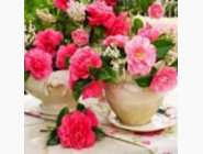 Новинки алмазной вышивки Розовые розы (MS24475)