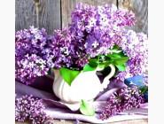 Цветы и букеты Сирень (ME21368)
