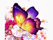 Солнечный бабочка (ME21349)