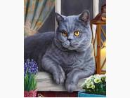Новинки алмазной вышивки Ученый кот (GL77893)