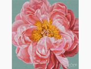 Цветы, натюрморты, букеты Pink kiss