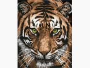 Величественный тигр