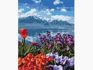 Цветы и горы