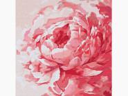 Цветы, натюрморты, букеты Розовый пион