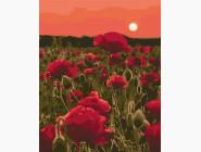 Розы в поле