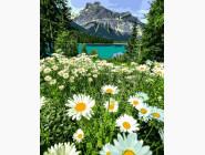 Пейзаж и природа Ромашковое поле в Альпах