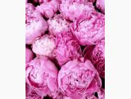 Цветы, натюрморты, букеты Прелесть розовых пионов