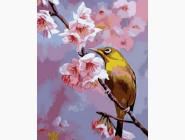 Колибри на яблоневой ветке