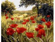 Цветы, натюрморты, букеты Маковая поляна