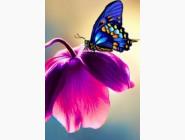 Новинки алмазной вышивки Бабочка на цветке