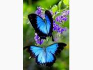 Алмазная вышивка  My Art Взмах крыльев бабочки (TN046, На подрамнике)