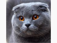 Новинки алмазной вышивки Вислоухий кот