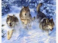 Новинки алмазной вышивки Стая волков в снегу