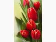 Новинки алмазной вышивки Тюльпаны для родной