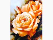 Новинки алмазной вышивки Сладкий аромат роз