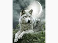 Новинки алмазной вышивки Волк под луной