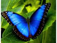 Новинки алмазной вышивки Красота бабочки Морфо