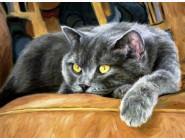 Новинки алмазной вышивки Сонный кот