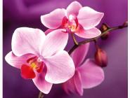 Алмазная вышивка  My Art Нежные орхидеи (TN934, На подрамнике)