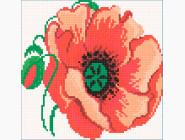 Цветы и букеты Красный мак