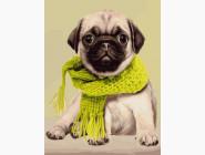 Коты и собаки Мопс в шарфике