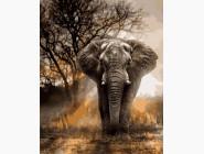 Животные и рыбки Слон в лучах заката
