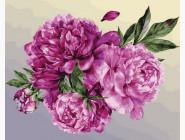 Цветы, натюрморты, букеты Пионовая нежность