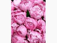 Цветы, натюрморты, букеты Утонченные пионы