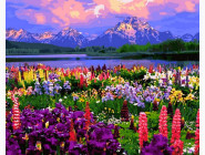 Цветы, натюрморты, букеты Полевые цветы