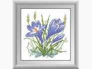 Цветы и букеты Крокус