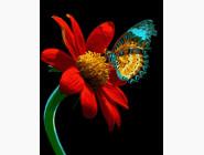BK-GX21524 Рисование по цифрам Бабочка на цветке (Без коробки)