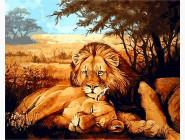 Животные и рыбки Львы на отдыхе