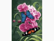 Бабочки и орхидея