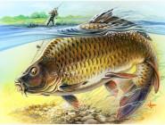 Рыбалка и охота Трофейный карп
